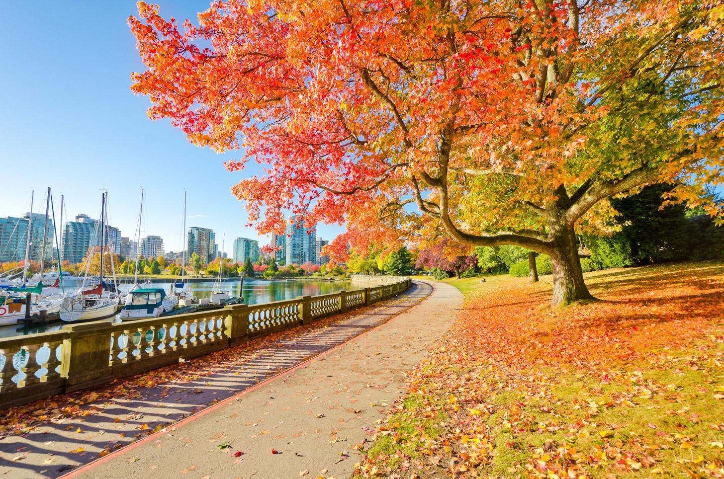 De herfst zorgt ook in Vancouver voor fraaie herfstkleuren